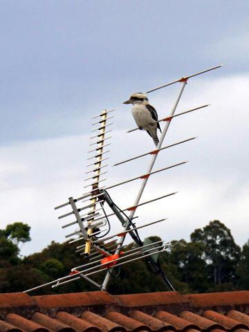 Digital Antenna Installer Perth